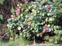 bloemen4.JPG