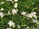bloemen7.jpg