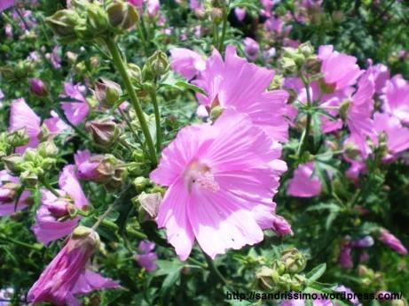 bloemen11.jpg